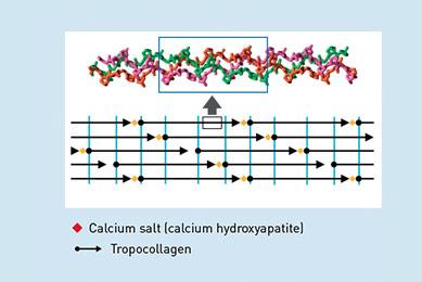 COLLAGEN AND CALCIUM